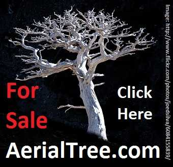 AerialTree.com for sale
